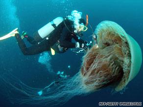 Art.jellyfish.file.afp.gi